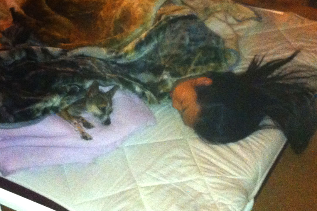 me and Sake sleeping