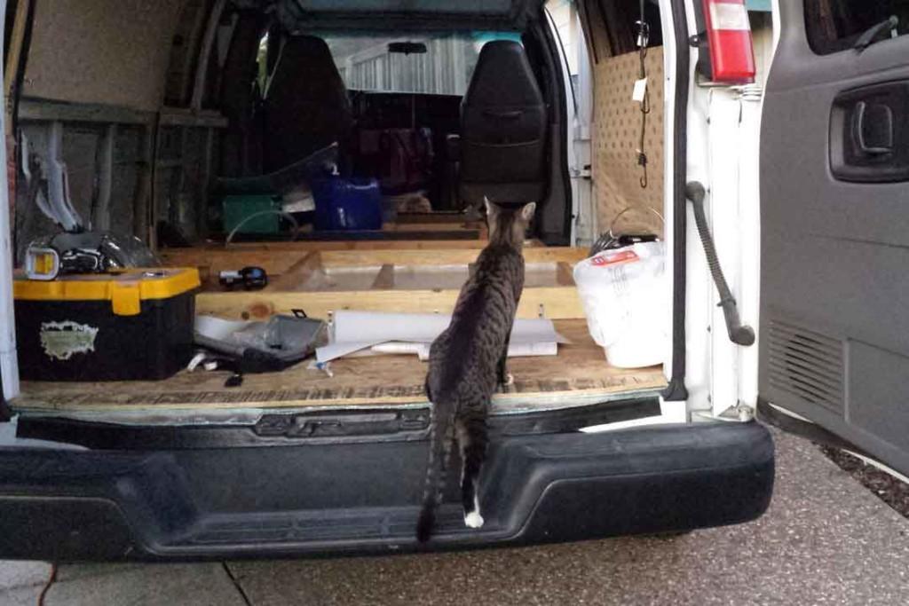 cat visits my van